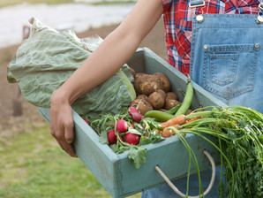 6 Steps to Getting Your Farm Organic Certified