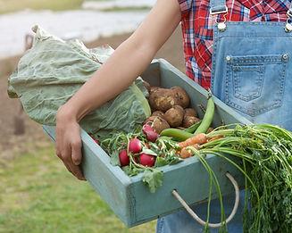 Légumes organiques
