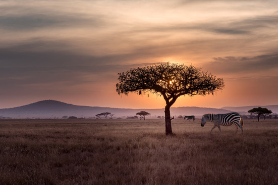 Experience a Safari From Your Home With Virtual Day trips