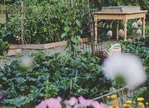 Aménager un jardin potager d'agrément: 3 conseils fondamentaux pour réussir.