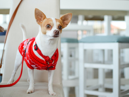 Is your dog a fashionista?