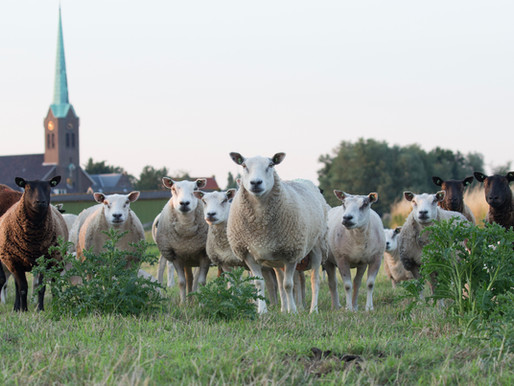 9 APRIL: First European Wool Day!