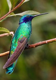 Pássaro brilhante