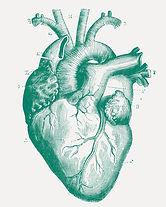 Illustriertes Medizinisches Herz