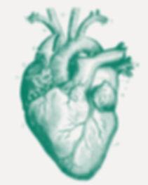 Cœur médical illustré