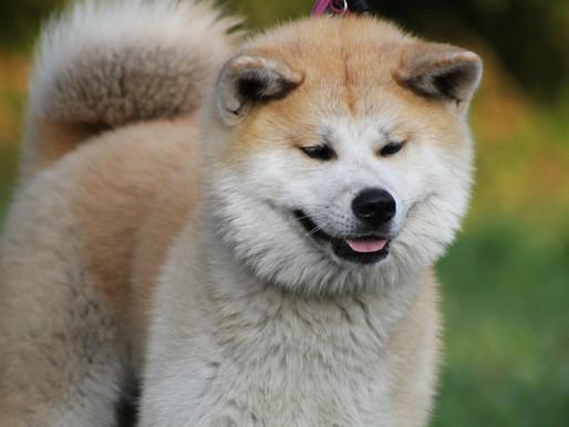 Doge June