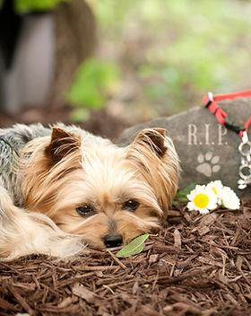 Funeral de perro