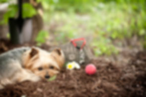 pet cremations dog