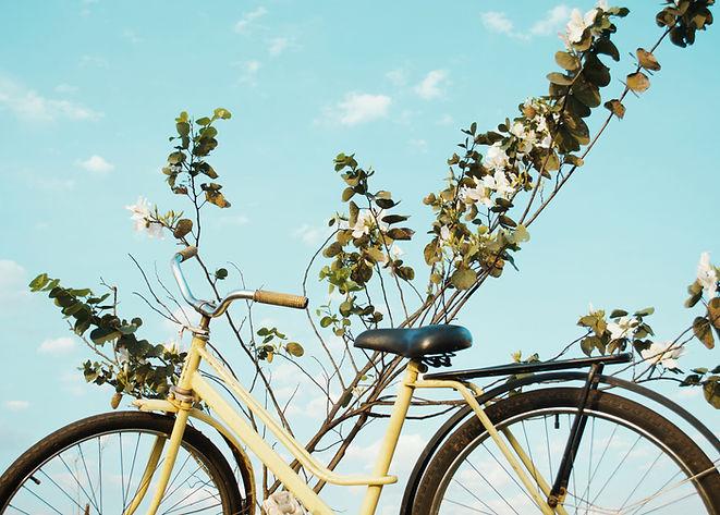 Bicicleta e natureza
