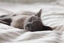 energetische behandlung tiere   enegetische behandlung katzen