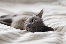 眠れる森の猫