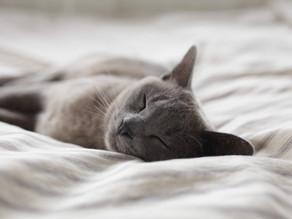 放下煩憂,安定大腦,安心好眠