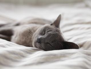 Schlafstörungen - was sie mit Stress zu tun haben und was Sie tun können!