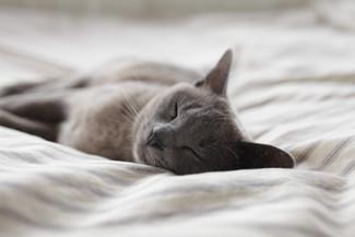 Can Foot Reflexology improve sleep quality?