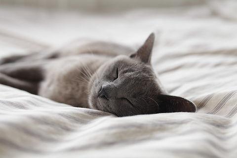 sova katten