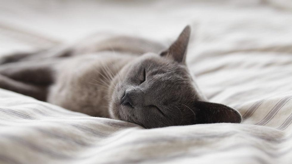Free breath and body scan meditation for sleep