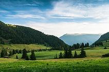 Panorama verde