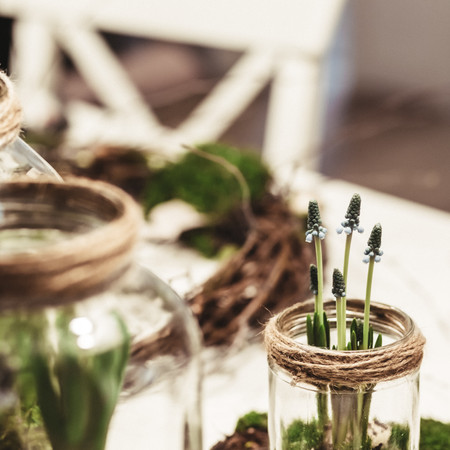 Plants Terrarium Kit