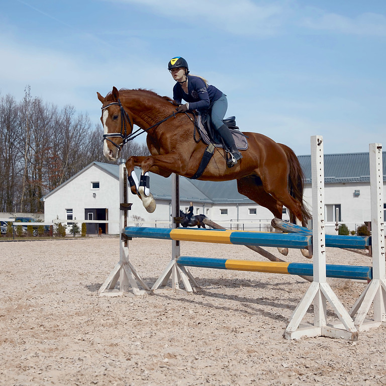 Hunter and Jumper Schooling Show Series