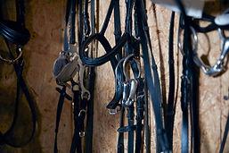 馬具・頭絡・鞍の寄付を募集