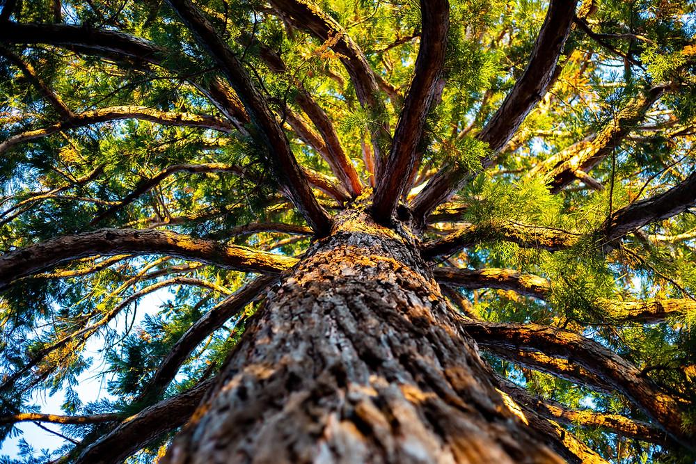 Baum hat starken Stamm mit unzähligen Ästen. Gesellschaftliche Bewegungen für Erneuerung können nur gemeinsam stark werden.