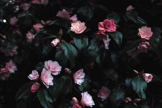 Rosa Blumenblüte