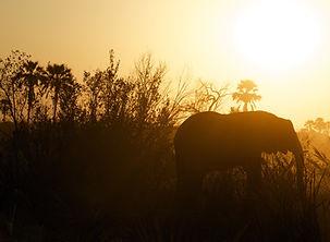 Silhouette of Elephant