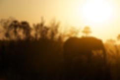 Silhouette des Elefanten