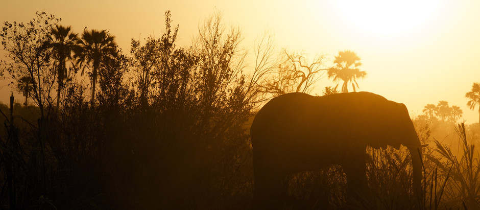 Elephants Worship the Moon, by Jaclyn Foster