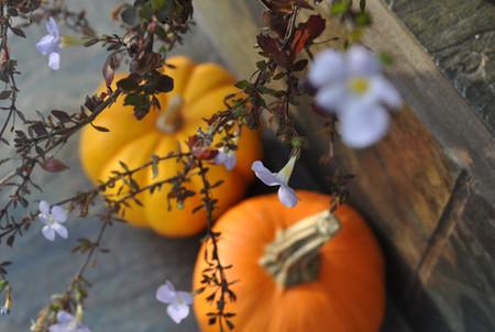 Thanksgiving-Kürbisse