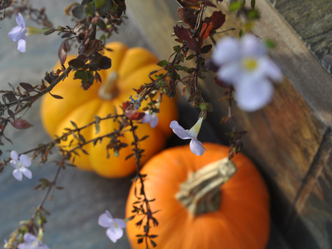 Devotion: The Encore of Thanksgiving (New Beginnings, Part One)
