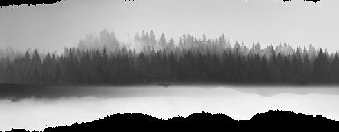 Graustufenlandschaft