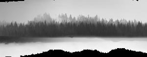 Misty Treescape