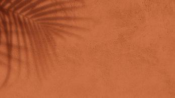 Palm tree tropical shadow on orange Concrete Wall