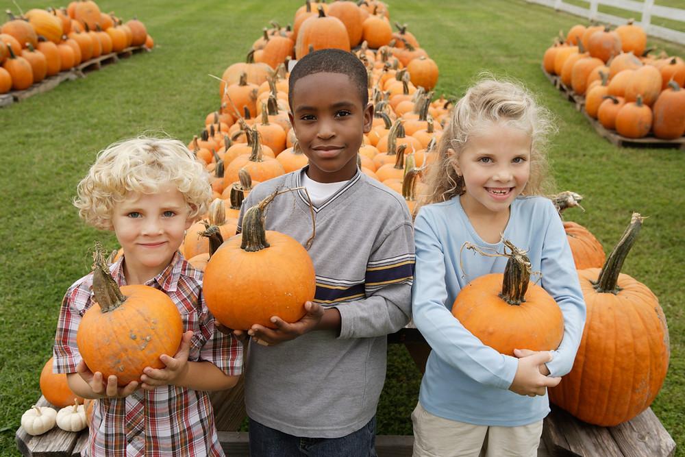 O cantato das crianças com os alimentos ajuda a dessensibilizar olfato, tato e paladar e pode promover o interesse para experimentá-los. Na foto há 3 crianças em uma fazenda segurando abóboras