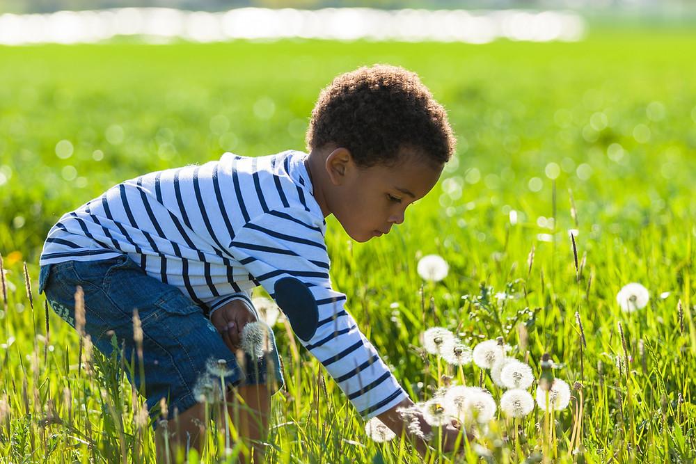 Black children in light blue shirt with dark blue strips and blue jean shors, picking dandelions in a feild.