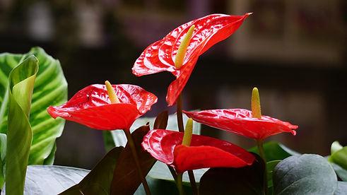 ビタミンカラーの植物