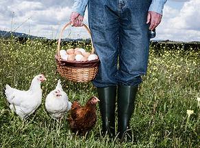 Фермер с органическими яйцами