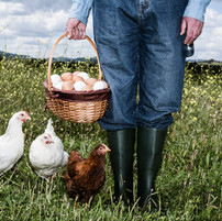 Agricultor com ovos orgânicos
