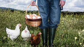 What Farmers Can Teach Us About Marketing