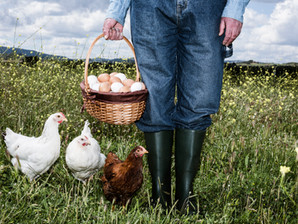 Raising chickens can be fun and profitable.  Here's how...