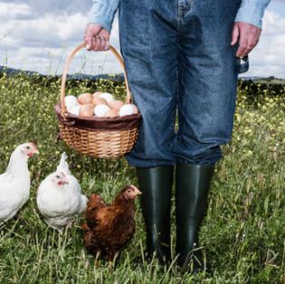 Berat: Qui égorge les poules ?