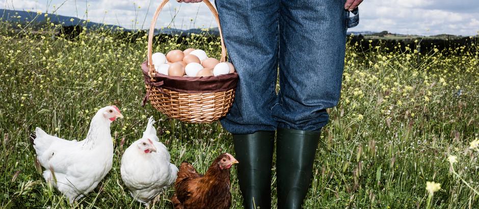 ALIMENTATION DURABLE : DOIT-ON PRÉFÉRER UNE AGRICULTURE BIO OU LOCALE ?