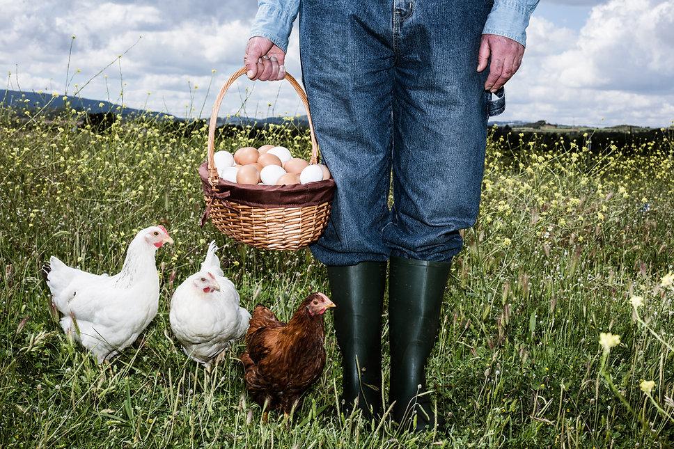 Contadino con uova biologiche