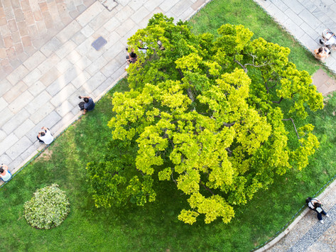 Landesgartenschau Überlingen startet am 9. April mit umfassendem Hygienekonze