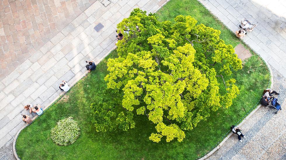 Jardín de la ciudad