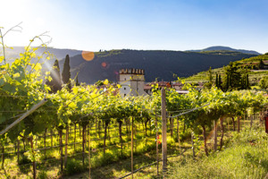 An Up and Coming Wine Region
