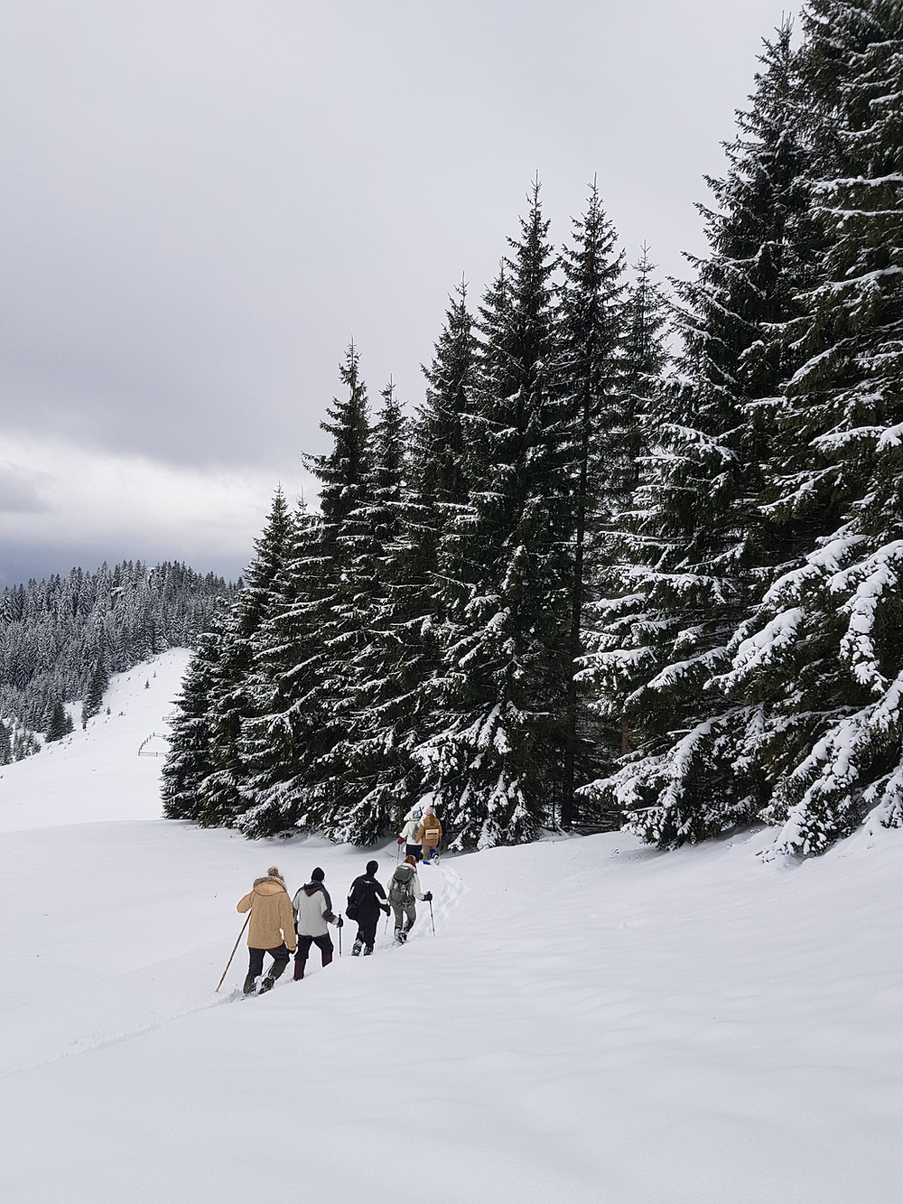 family and friends hiking through snow on an elopement surrounded by evergreen trees that is covered in a layer of snow