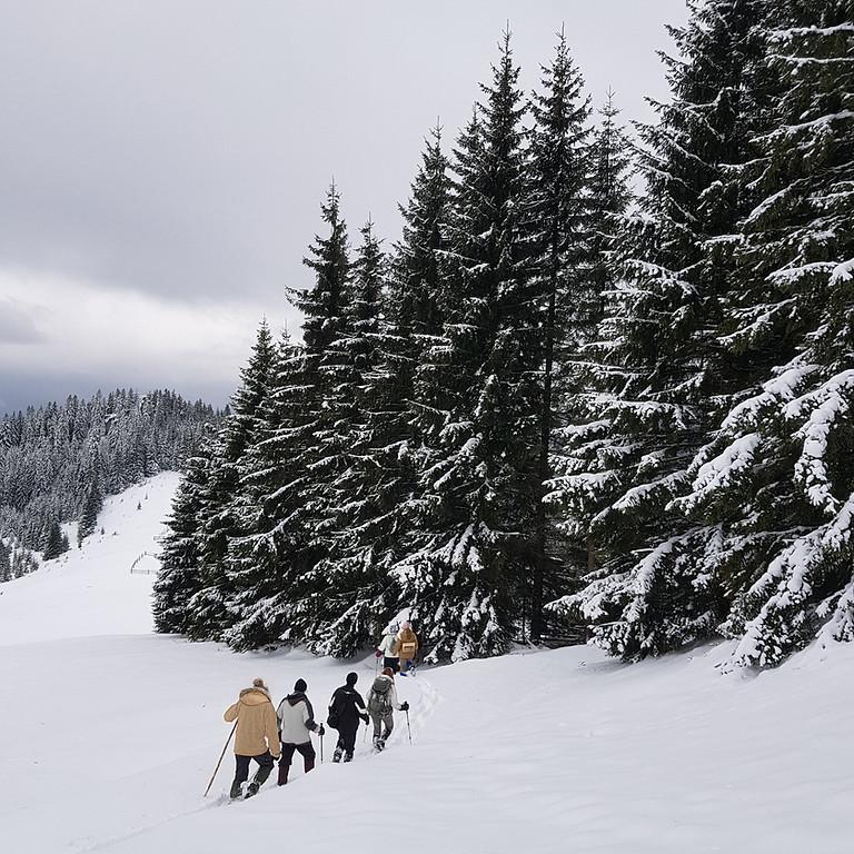 Winter Wonderland Frozen Party
