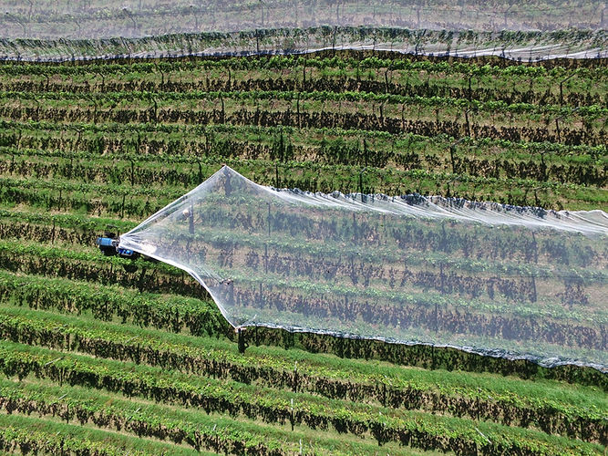 Net Covering Crops